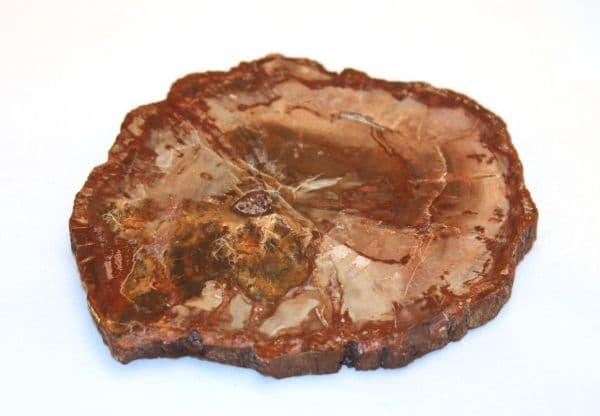 Магия камней: окаменелая древесина