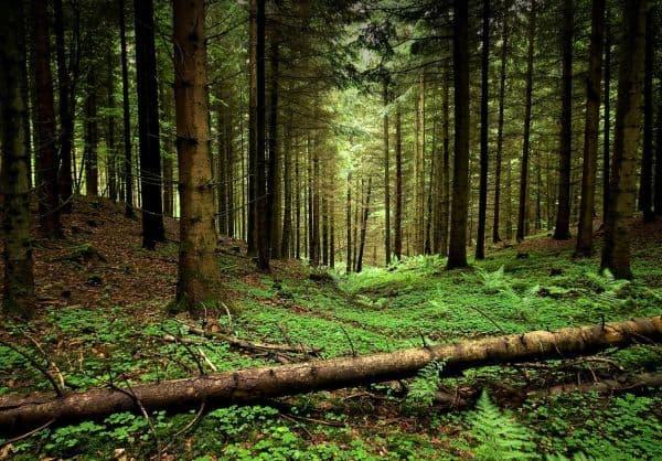 Народное лечение травами: порок сердца