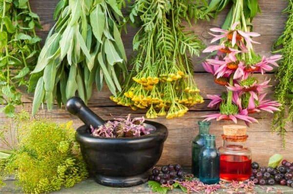 Про лекарственные растения
